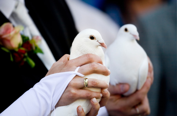 wedding-white-doves